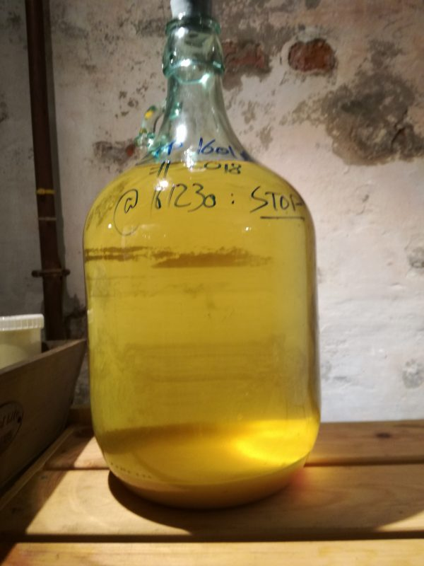 showmead experiment #1611